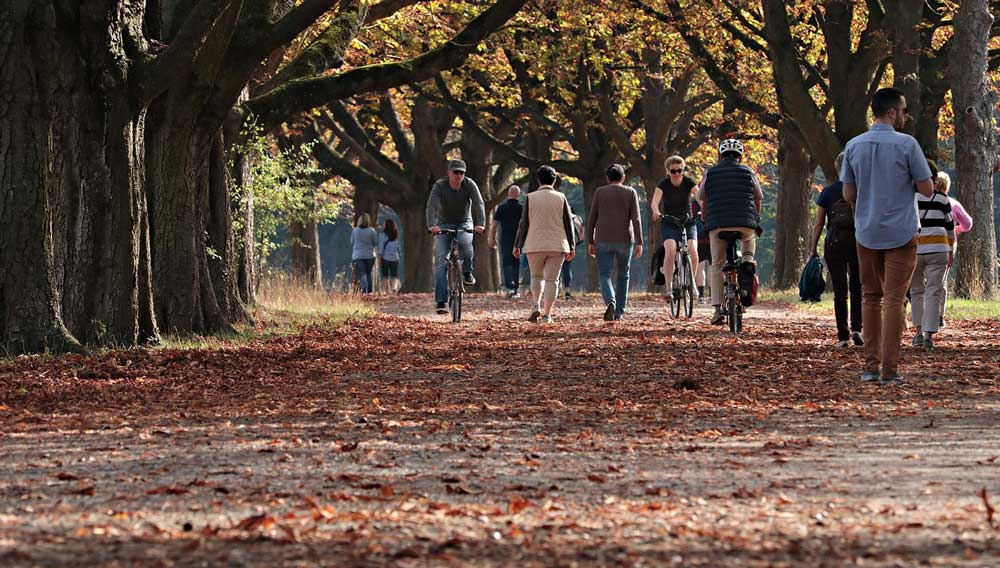 People walk around in the autumn leaves.
